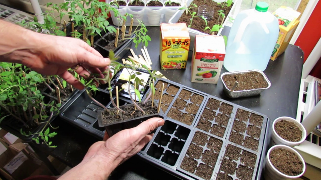 Easy Veggies To Grow From Seed